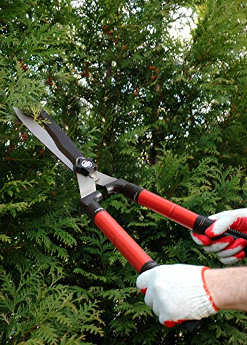 Buy long reach hedge trimmer