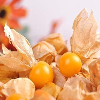 wpOP59NE 60Pcs Physalis Alkekengi Seeds Garden Fruit Growing Yard Bonsai Decor Plant - Yellow Physalis Alkekengi Plant Seeds : Garden & Outdoor