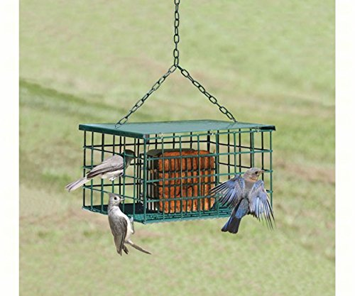 2 PACK Squirrel Resistant Suet Palace by Songbird Essentials