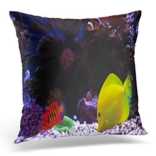 (Dr-Drin fujianput Throw Pillow Cover Fish Colorful Angel Saltwater Fishes in Reef Tank Red Decorative Pillow Case Home Decor Square 18