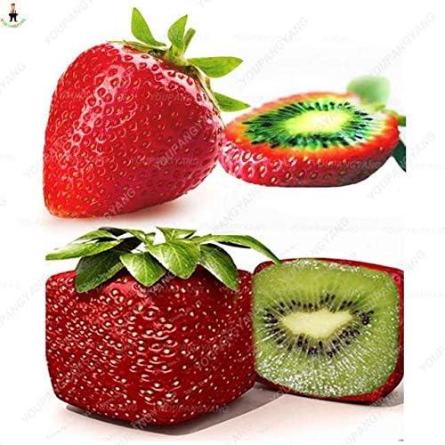 Pinkdose 500 Piezas de Plantas de Fresas de Fresas de Kiwi de ...