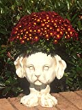 Homestyles Muggly #37615 Muttley the Puppy Dog Animal Face Planter 12″ Antique White Garden Statue Review