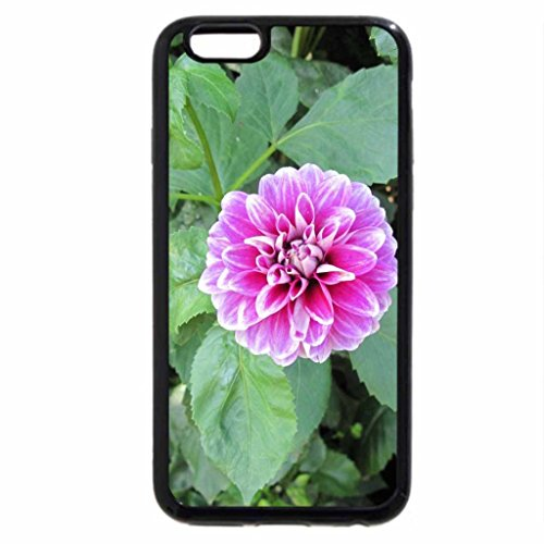iPhone 6S / iPhone 6 Case (Black) A Pink Dahlia