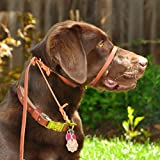 Leather Perfect Pace Halter Leash (Tan, 4' Leather)