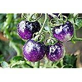 Rare Purple Blue Indigo Rose Tomato About 20 Seeds
