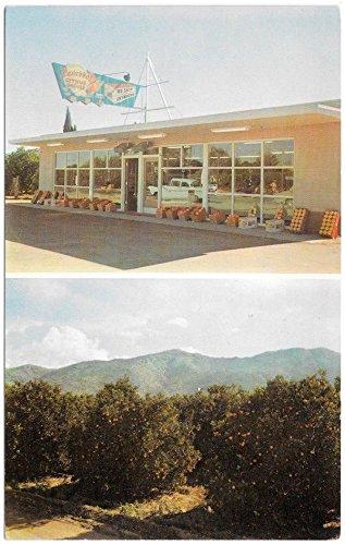 Postcard Navarro€™s Citrus Groves Roadside Store in Phoenix, - Stores Navarro