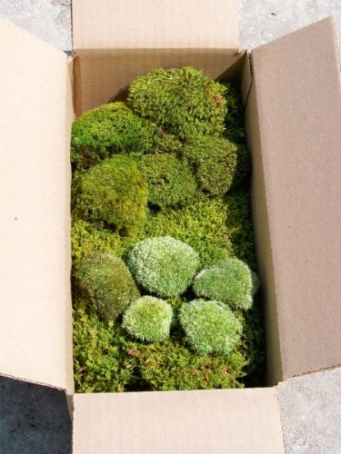 Amazon Com Terrarium Moss Kit Terrarium Supplies Garden Outdoor