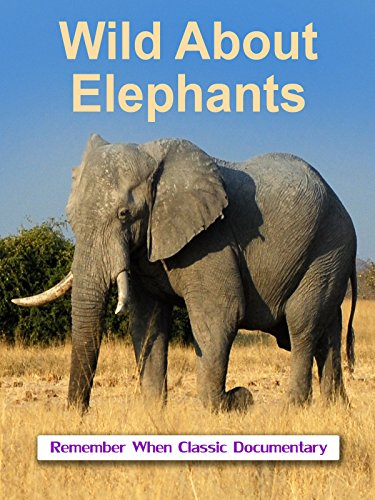 Wild About - Elephants - Can Elephant Remember