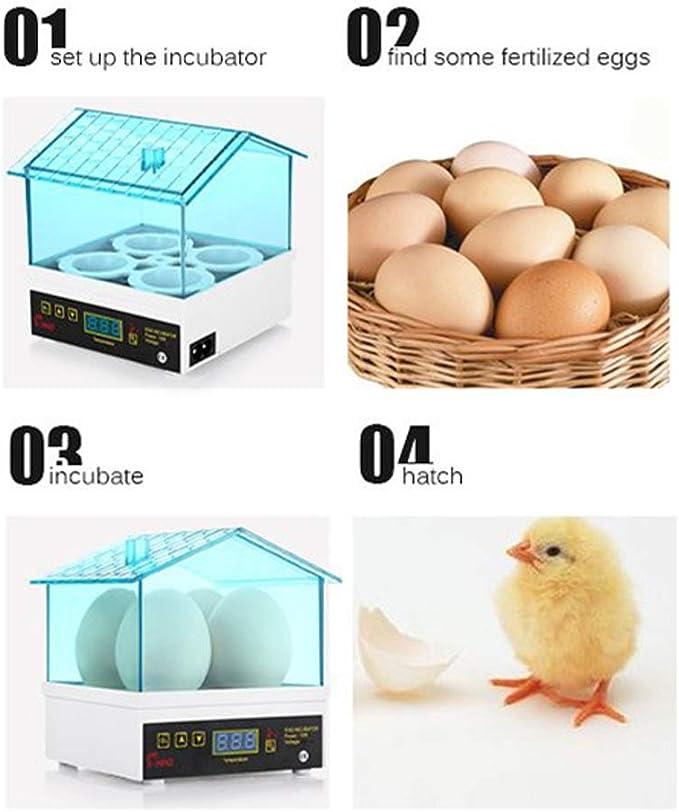 wisedwell 24 Eier Automatischer Inkubator Egg Automatischer voll digitaler Hatcher Hocheffiziente Beleuchtung f/ür H/ühner Tauben Wachteln Enten