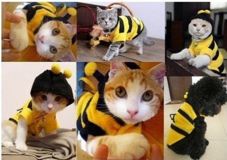 TQWY-Small-Bumblebee-Dog-Cat-Puppy-Halloween-Clothes-Pet-Apparel-Bumble-Bee-Dress-Up-Pet-Coat-Hoodie