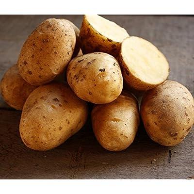 Golden Yukon Nuggets Heirloom Potato Seed 3lbs Virus Free Non GMO : Garden & Outdoor