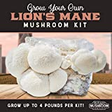 Grow Your Own 10lb Lion's Mane Mushroom Kit