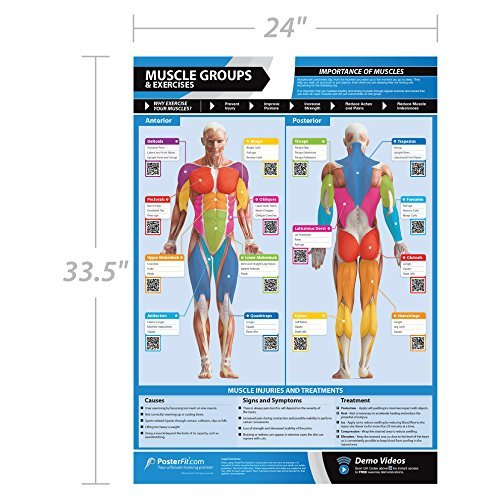 Muscle Groups & Exercises Gym Poster | Anterior & Posterior Muscles & Exercises | Laminated Gym & Home Poster | FREE Online Video Training Support | Size A1 (841 mm X 594 mm)