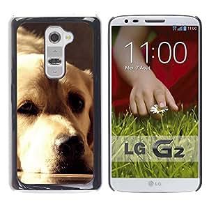 Vortex Accessory Carcasa Funda PARA LG G2 For - Golden Retriever Labrador Sunlight Face Dog