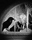 #9: Alfred Hitchcock 8x10 Promotional Photograph posing with crow bird in window The Birds