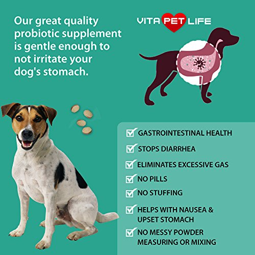 Cheapest Probiotics for Dogs having natural Enzymes Digestive aid for Dogs Improves Upset Stomach Gas Bad Breath Constipation Gut Flora and Intestinal Tract 75 Bill CFUs natural Chews 60 chews Check this out