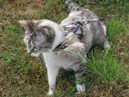 Mynwood - Arnés para Gato de Combate, diseño de tormenta de ...