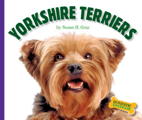 Yorkshire Terriers (Domestic Dogs)
