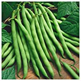 buy Everwilde Farms - 1 Lb Provider Green Bean Seeds - Gold Vault now, new 2020-2019 bestseller, review and Photo, best price $8.00