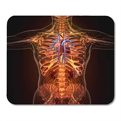 (Emvency Mouse Pads Blue Cardiology Anatomy of Human Organs in X Ray View Red Body Blood Mousepad 9.5