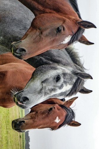 A Beautiful Horse Trio Journal: Take Notes, Write Down Memories in this 150 Page Lined ()