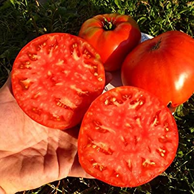 Seeds Red Beefsteak Tomato Ukrainskyy Hihant-Ukrainian Giant Organic Heirloom