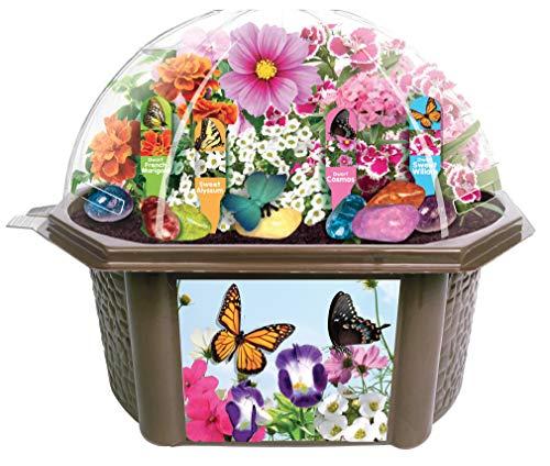 Most bought Butterflies