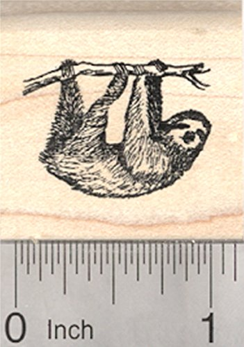 Sloth Rubber Stamp  Arborial Three Toed Species Of South And Central America  Small