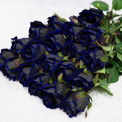 20Pcs Blooming Midnight Rose Seed Blue Black Roses Bush Flowers Rare Seeds