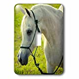 Danita Delimont - Animals - Egyptian, Davenport Arabian stallion - Light Switch Covers - single toggle switch (lsp_230513_1)