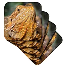 cst_83647_3 Danita Delimont - Lizards - Bearded Dragon, Pogona vitticeps, lizard, reptile - NA02 AJE0367 - Adam Jones - Coasters - set of 4 Ceramic Tile Coasters