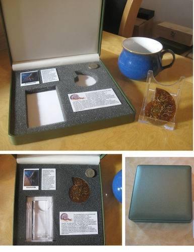 premium split ammonite fossil set in collectors box great display dinosaur gift