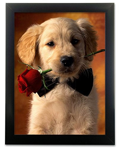 Cut Rose Illusion (Puppy Picture - Golden Retriever Dog with Rose - Black Framed Animal Artwork - 3D Wall Art)