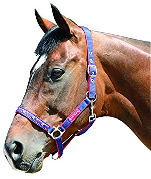 Harry Hall Galaxy Horse Head Collar - Navy Blue, Pony by Harry Hall