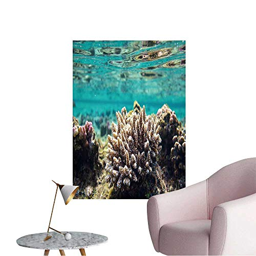 (Wall Decoration Wall Stickers Coral Reef in Red Sea,Egypt Print Artwork,32