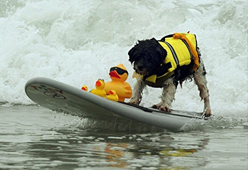 M yellow M yellow Pet Life Jacket, Dog Swimsuit, Safe Swimming Pool in Summer,Yellow,M