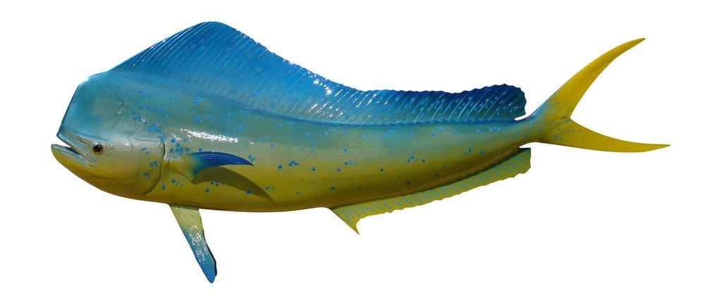 53'' Bull Dolphin Two Sided Wall Mount Fish Replica Trophy, Fishing Wall & Coastal Decor