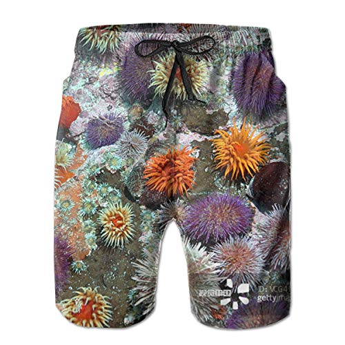 (Men's Summer Swimming Shorts, Quick Dry Beach Sport Shorts, No Mesh Lining Colourful Sea Urchins Cover The Rocks Board Shorts for Surfing, Beach Volleyball Game, Running)
