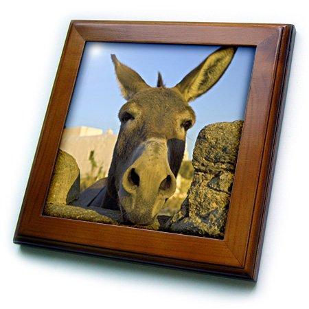 ft_81827_1 Danita Delimont - Donkeys - Greece, Mykonos, Hora, donkey and stone fence - EU12 DGU0093 - Darrell Gulin - Framed Tiles - 8x8 Framed Tile