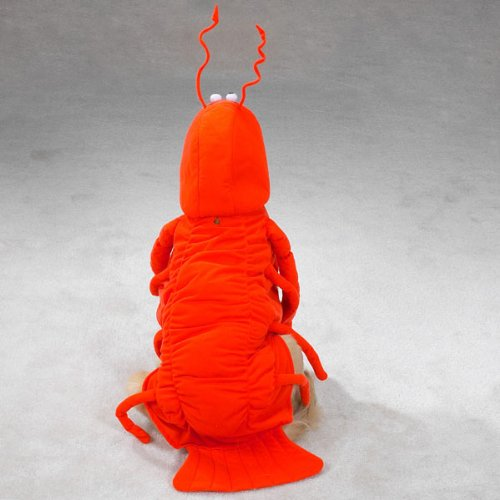 Casual Canine Lobster Paws Dog Costume, Small (fits lengths up to 12''), Red-Orange