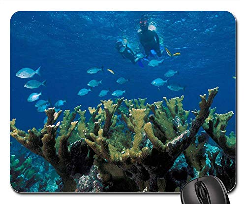 Mouse Pads - Elkhorn Coral Reef Ocean Marine Fish Tropical