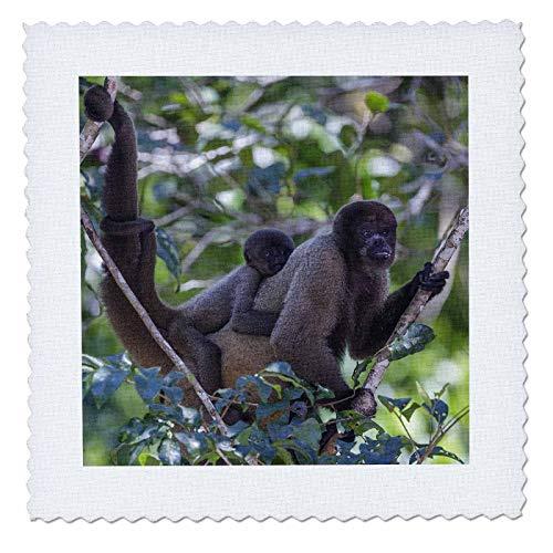 (3dRose Danita Delimont - Monkeys - Woolly monkeys, Amazonas, Brazil - 12x12 inch quilt square (qs_314059_4))