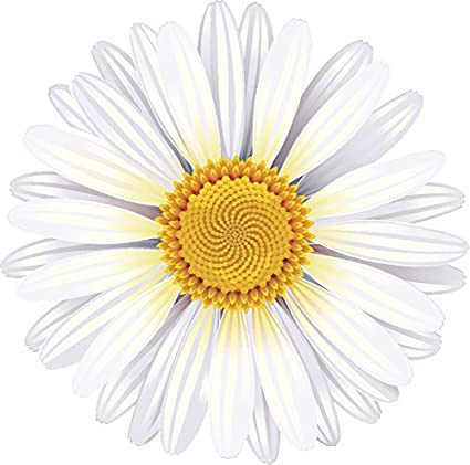 Choose Size /& Color Daisy Flowers Vinyl Sticker Decal