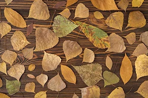 Fallen Leaves Covered The Planks Wedding Baby Photography Background Custom Photography Studio Photography Background