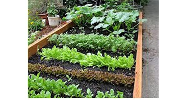 Amazon Com Vegetable Garden Collection Small Heirloom Organic