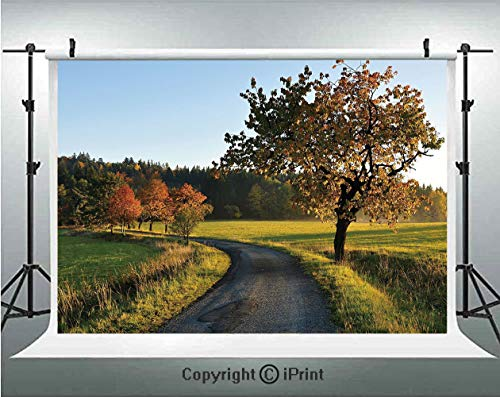 Landscape Photography Backdrops Autumn Road at Sunset and