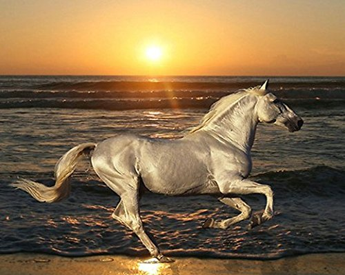 Crow's Soul 5D DIY diamond paintings diamond cross - embroidered diamond White horse running beach wave sea sunset animal 30x40CM