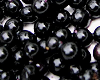 Garden Huckleberry Produces Abundant Sweet Fruit (10+) Fresh Harvested Seeds