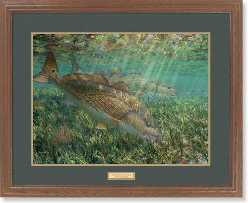 Searching the Shallows GNA Premium Framed Print by Mark A Susinno (Redfish Framed)