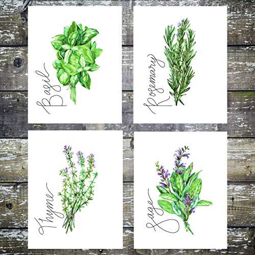 Kitchen Herbs Art Prints -Botanical Prints - (Set Of 4) 8x10s -Unframed
